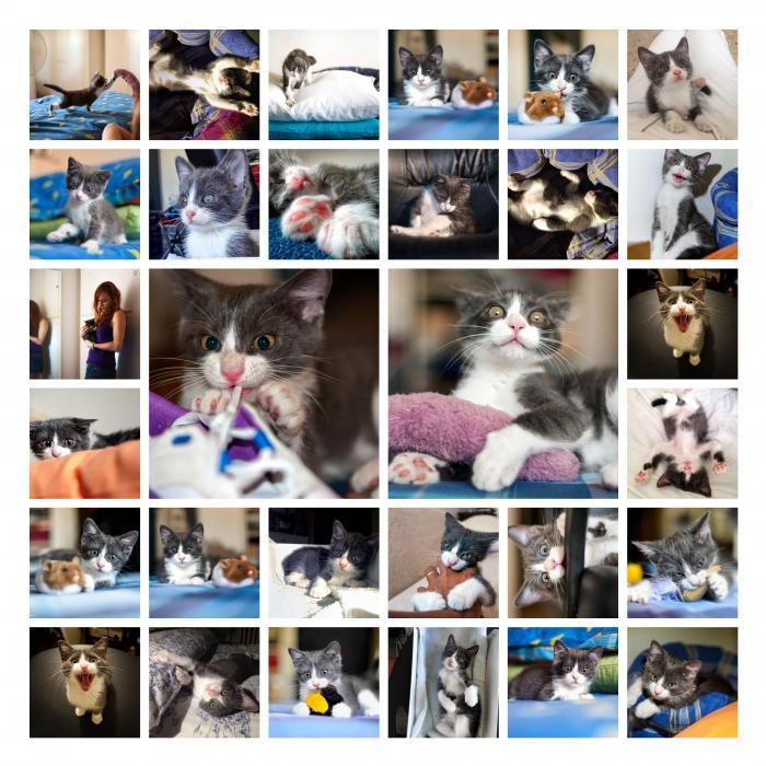 collage gatto cucciolo rocchini