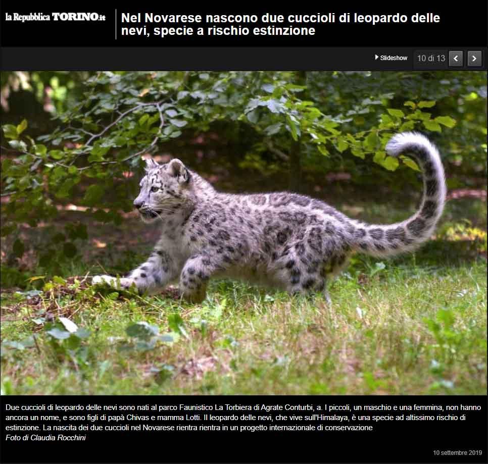 Rocchini leopardo nevi cuccioli