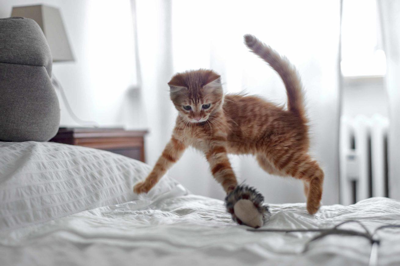gattino gioco rocchini