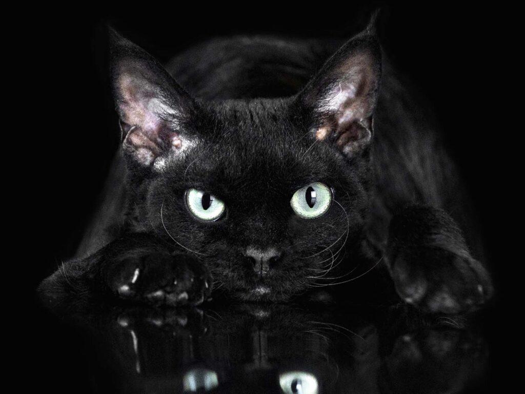 Pet Photography mentoring Rocchini